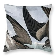 Fork Tailed Petrel, Thalassidroma Leachii By Audubon Throw Pillow