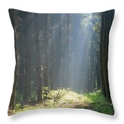 Forrest And Sun Throw Pillow