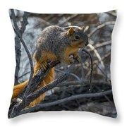Fox Squirrel - 8988 Throw Pillow
