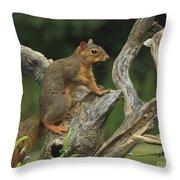 Foxy-2 Throw Pillow