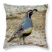 Gambel's Quail H1812 Throw Pillow by Mark Myhaver