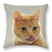 Ginger Tabby Cat Licking Top Of Nose Canvas Print Canvas Art By Michael Blann