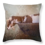 Goat In A Bucket Throw Pillow