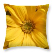 Golden Daisy Throw Pillow
