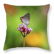 Gray Hairstreak Butterfly In Summer Throw Pillow