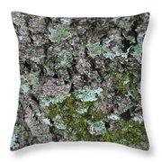 Gray Treefrog - 8522-2 Throw Pillow