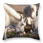 Grazing On Mount Evans Throw Pillow