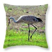Grazing Sand Hill Crane Throw Pillow