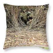 Great Bowerbird With Nut Throw Pillow