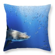 Great White Shark Throw Pillow by Nicole Young