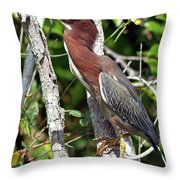 Green Heron In The Glades Throw Pillow