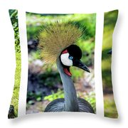 Grey Crowned Crane Gulf Shores Al Collage 6 Triptych Throw Pillow