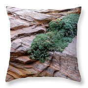 Growing From The Rock Terrain In Zion  Throw Pillow