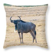 Handsom Wildebeest On The Plains Throw Pillow