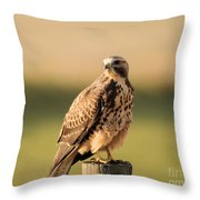 Hawk On The Edge Of A Field Throw Pillow