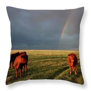 Heifers And Rainbow Throw Pillow by Rob Graham