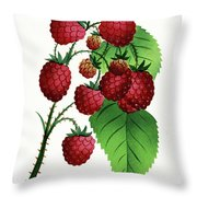 Hepstine Raspberries Hanging From A Branch Throw Pillow