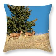 Herd Of Colorado Deer Throw Pillow