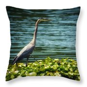 Heron In The Lily Pads Throw Pillow