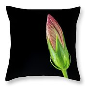 Hibiscus Bud In Morning Light Throw Pillow