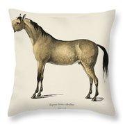 Horse  Equus Ferus Caballus  Illustrated By Charles Dessalines D' Orbigny  1806-1876  Throw Pillow