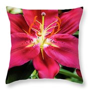 Hot Pink Day Lily Throw Pillow