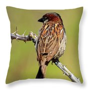 House Sparrow V1818 Throw Pillow
