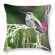 Hummingbird 105 Throw Pillow