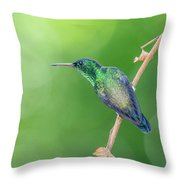 Hummingbird Abyss Throw Pillow