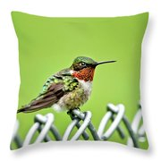 Hummingbird On A Fence Throw Pillow