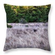 I Spy 4 Deer Throw Pillow
