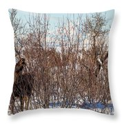 In Ninilchik A Moose Grazes In The Village In Late Winter Throw Pillow