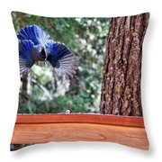 Incoming Steller's Jay Throw Pillow