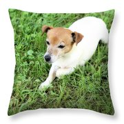 Jake Russell Throw Pillow