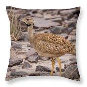 Karoo Korhaan Throw Pillow