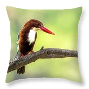Kingfisher On The Lookout Throw Pillow
