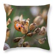 Lady Bird / Lady Bug In Flower Seed Head Throw Pillow