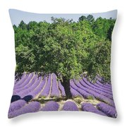 Lavender Field And Tree Throw Pillow