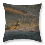 Lc12 Throw Pillow by Joshua Able's Wildlife