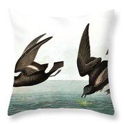 Least Stormy Petrel, Thalassidroma Pelagica By Audubon Throw Pillow