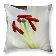 Lily Casa Blanca 3 Throw Pillow