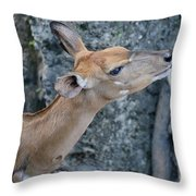 Lowland Nyala Throw Pillow