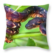 Madagascar Ground Boa Acrantophis Throw Pillow