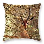 Male Gerenuk Throw Pillow