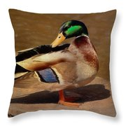 Male Mallard - Painted Throw Pillow