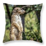 Meerkat Alert Throw Pillow by Kate Brown