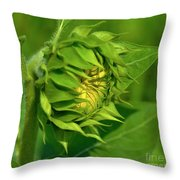 Metamorphosis-2 Throw Pillow