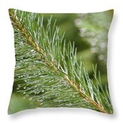 Moist Pine Tree Leaves With Water Droplets. Throw Pillow