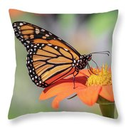 Monarch 2018-25 Throw Pillow