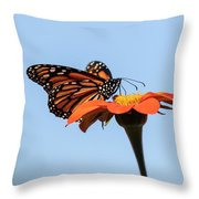 Monarch 2018-27 Throw Pillow